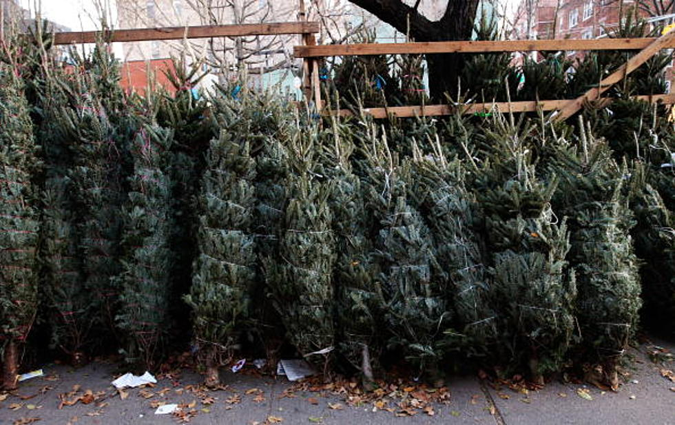 amazon plans to sell seven foot tall live christmas trees this year video - How Long Do Live Christmas Trees Last