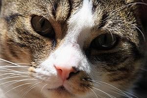 Here Kitty-Kitty!