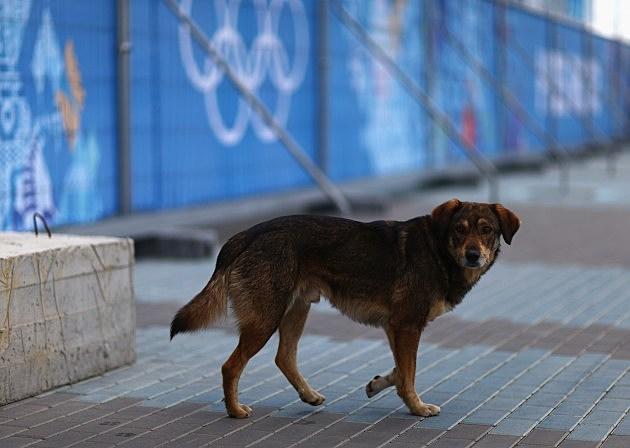 Stray Dog in Sochi