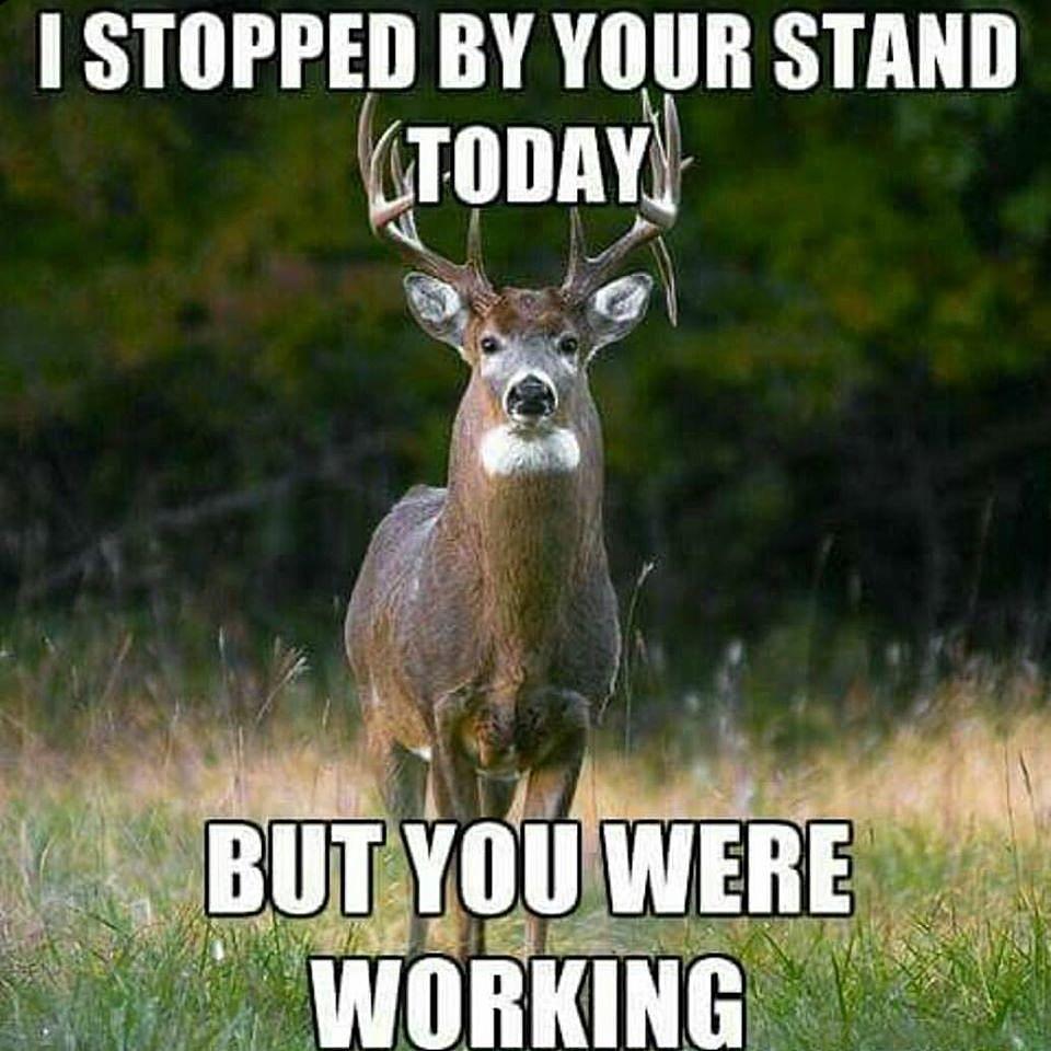 deer hunting memes -#main